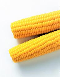 Kukuřičné klasy ARDO